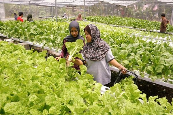 Belia Sabah Digesa Teroka Peluang Dalam Akuaponik
